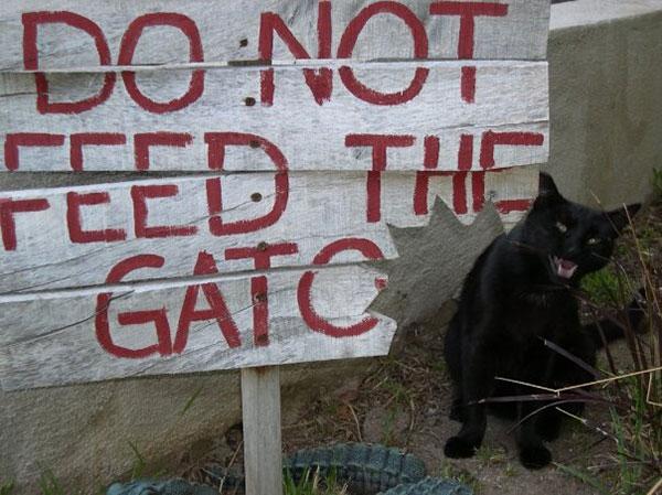 black cat marley