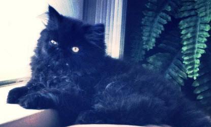 black cat Minxie