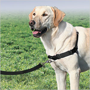 No Pull Harness_xfpgc3 which harness is right for your dog? sheknows