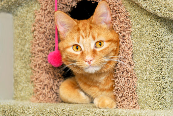 Orange cat in playhouse