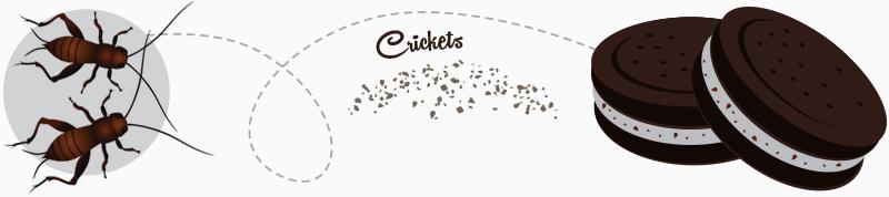 cricket oreos