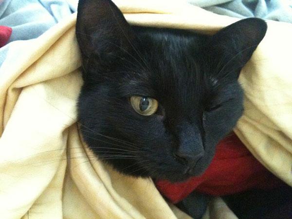 black cat peanut
