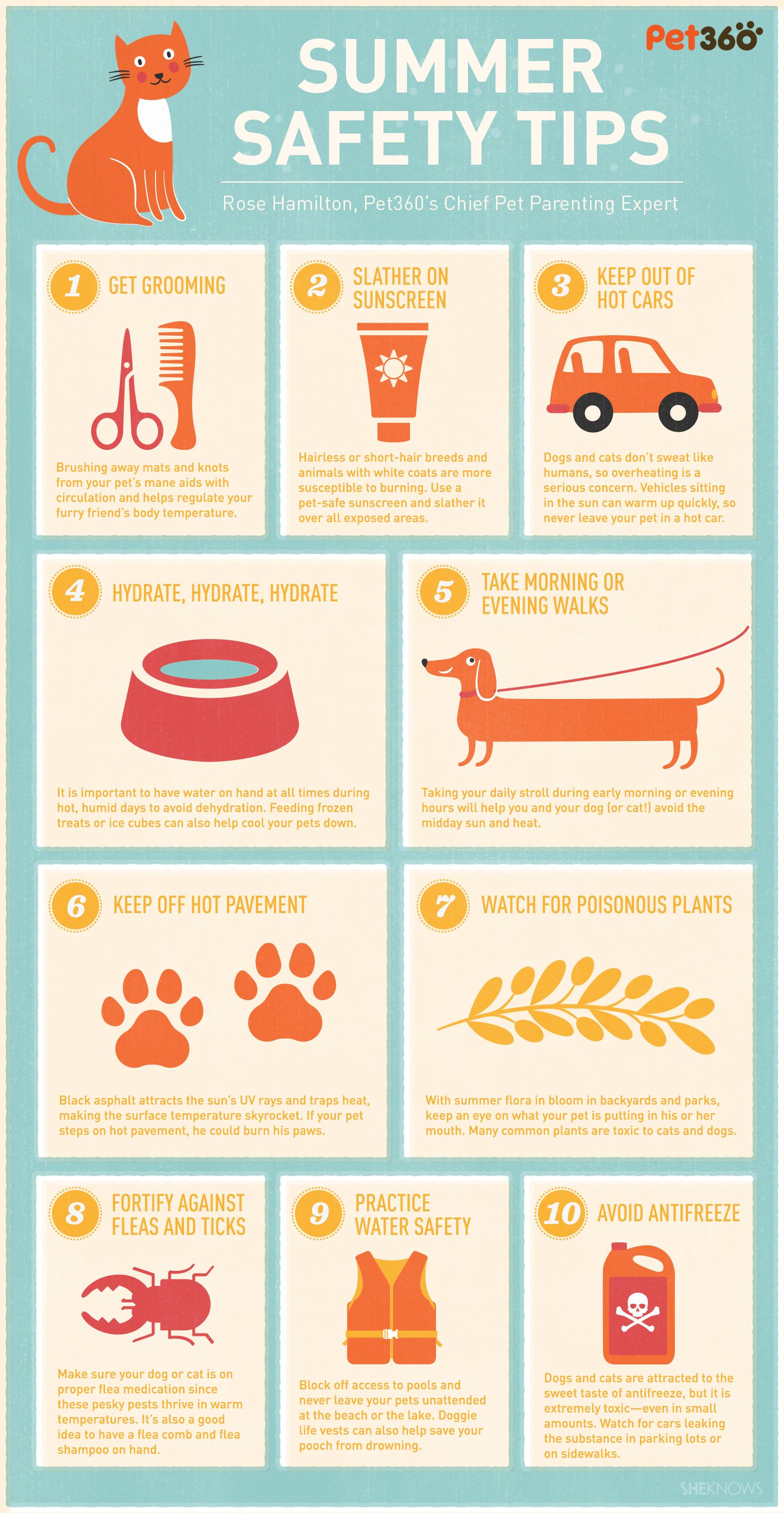 pet summer safety