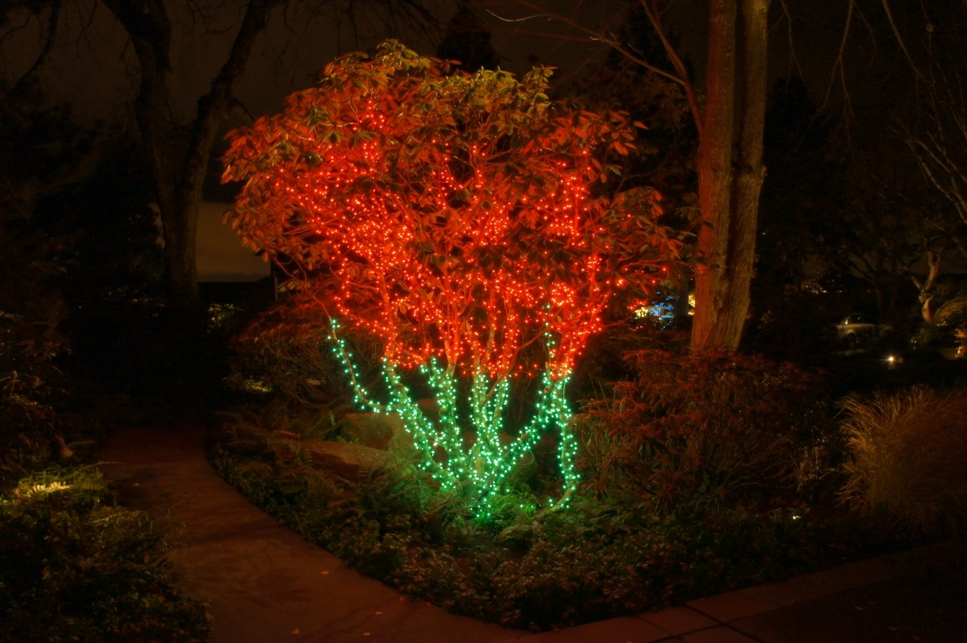 Tree with green and red light display
