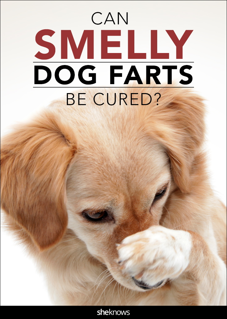 If Your Dogs Farts Can Peel Paint Off The Walls We May Have A Cure
