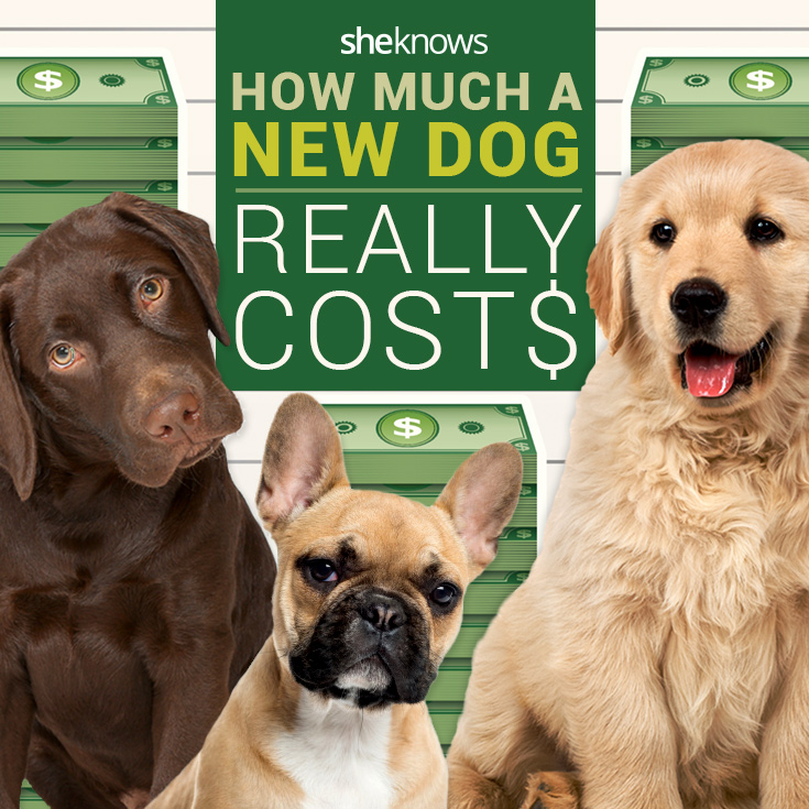 How much a new dog really costs