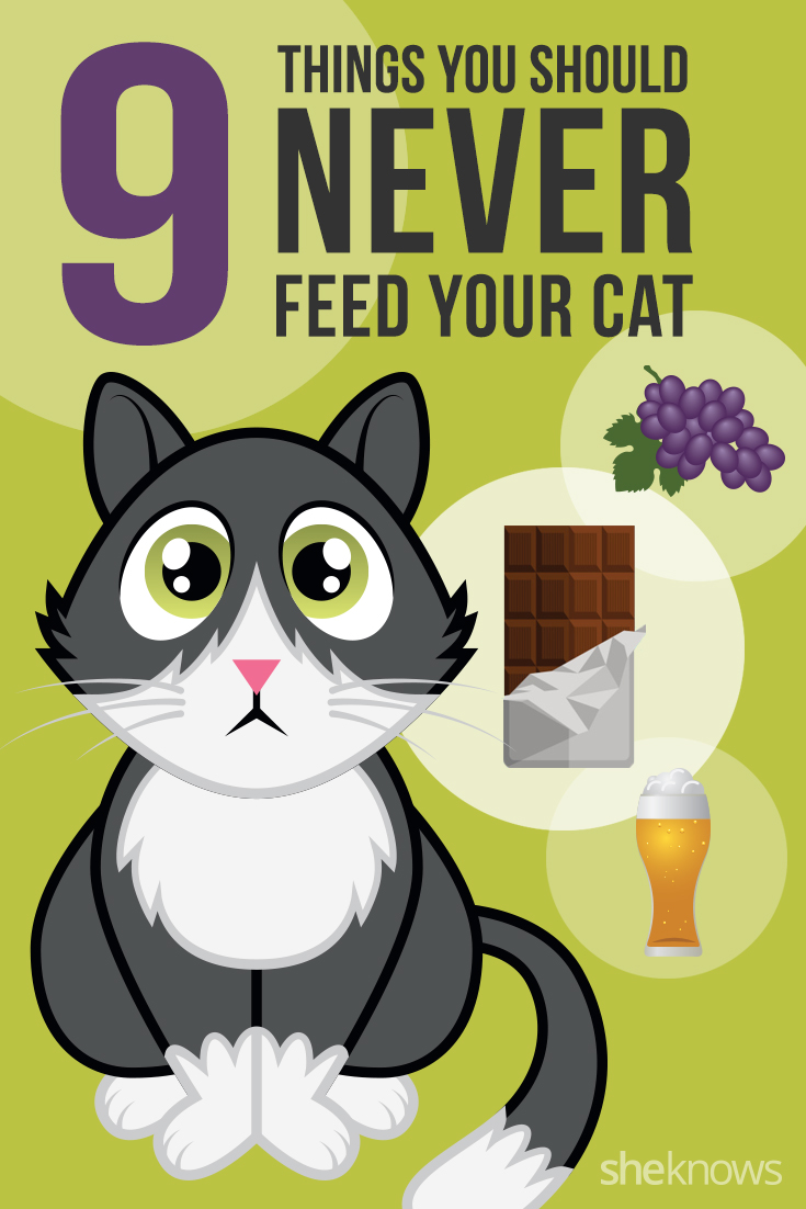 9 Foods you should never feed your cat