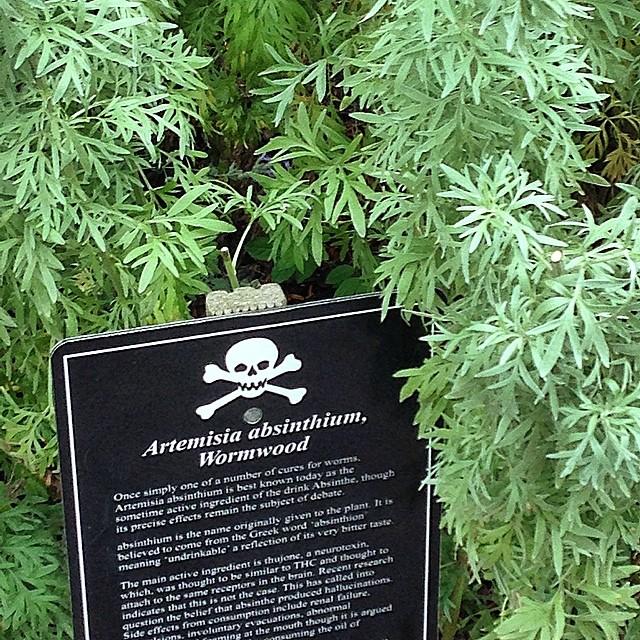 Poison Garden Wormwood