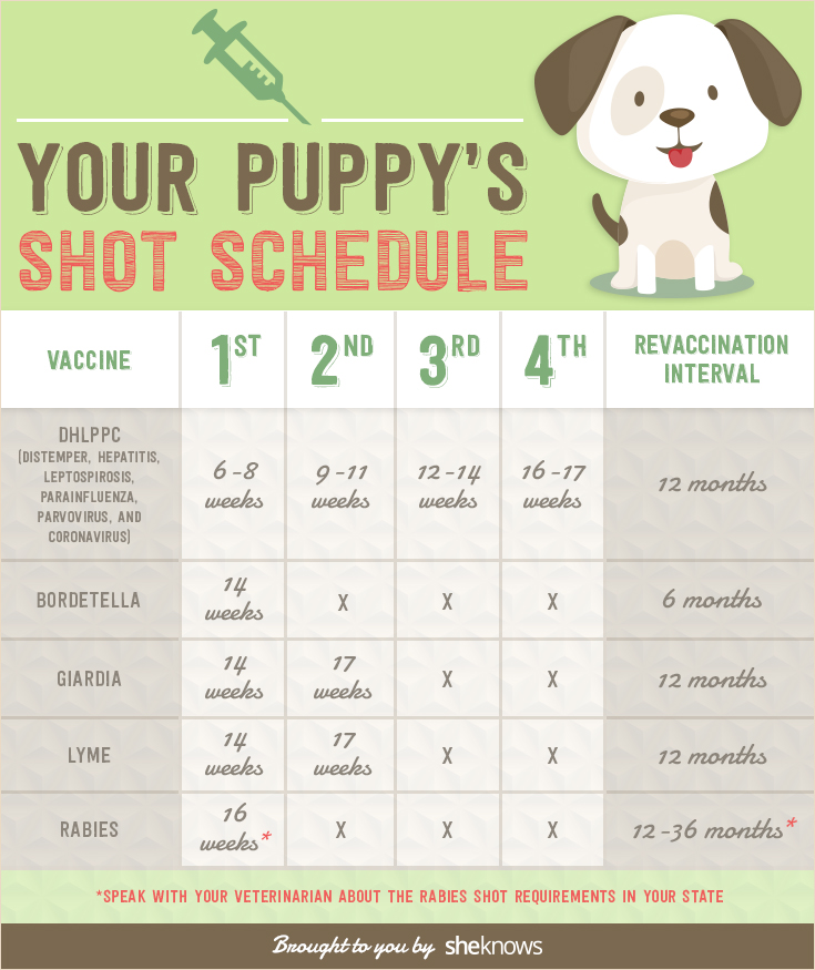 Keep Your Puppy Healthy With This Vaccination Schedule Infographic
