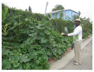 Guerrilla gardening in South Central Los Angeles