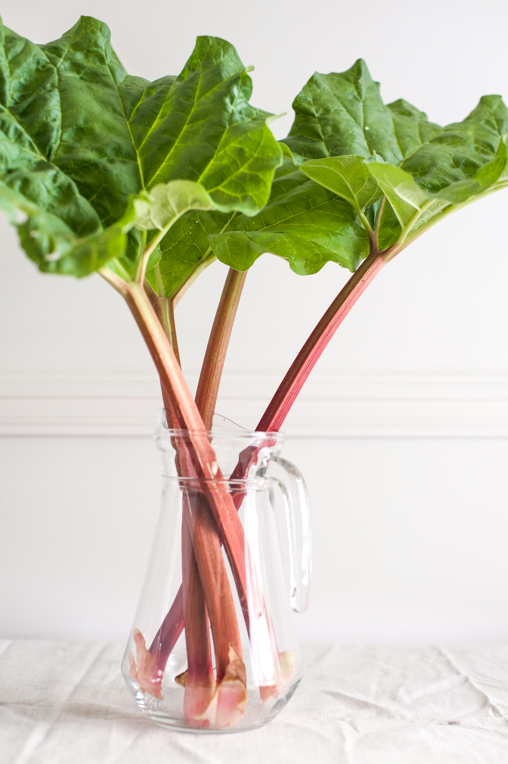 Rhubarb stalks in glass vase against white background