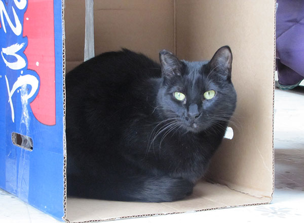 black cat samba