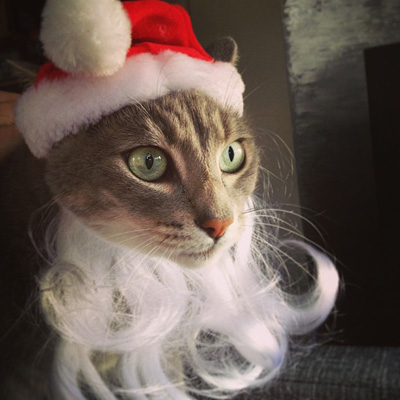 """I would prefer to be called by my chosen name, Pensive Hipster Santa Kitty."""