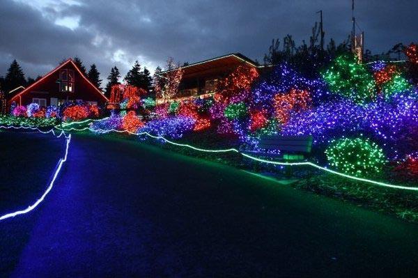 Seattle Zoo Lights
