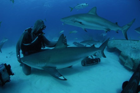 Shark Week comes home