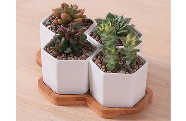 Hexagonal succulent holder, set of 4