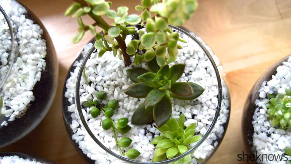 How To Make A Pretty Succulent Terrarium In 7 Easy Steps Sheknows