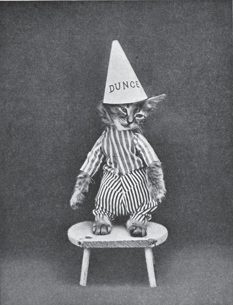 kitten dunce