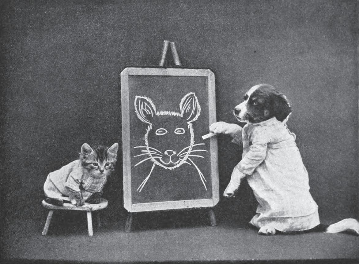 kitten dog school