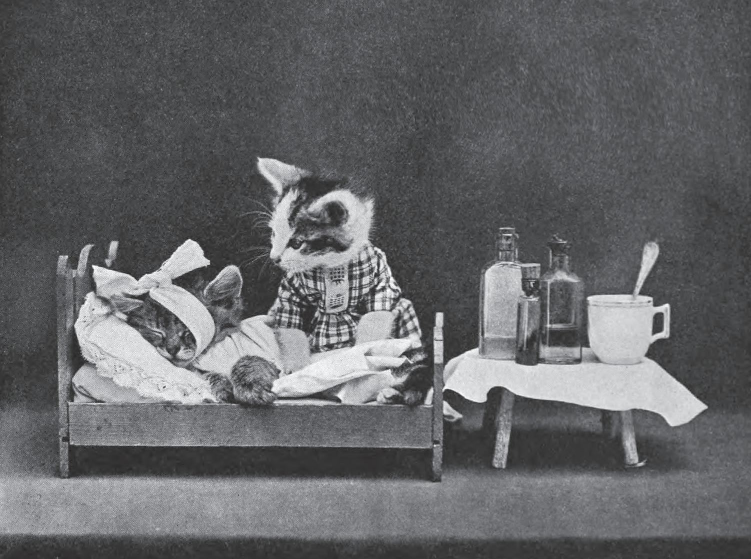 kitten hospital