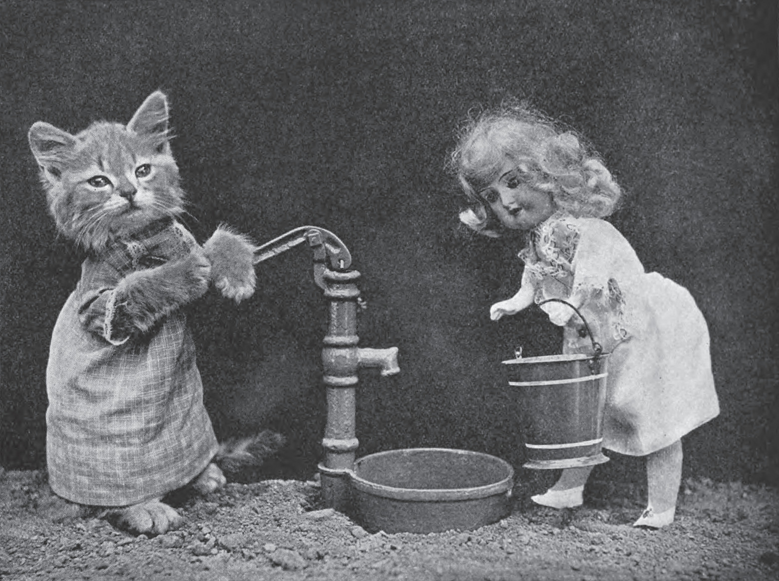 kitten well