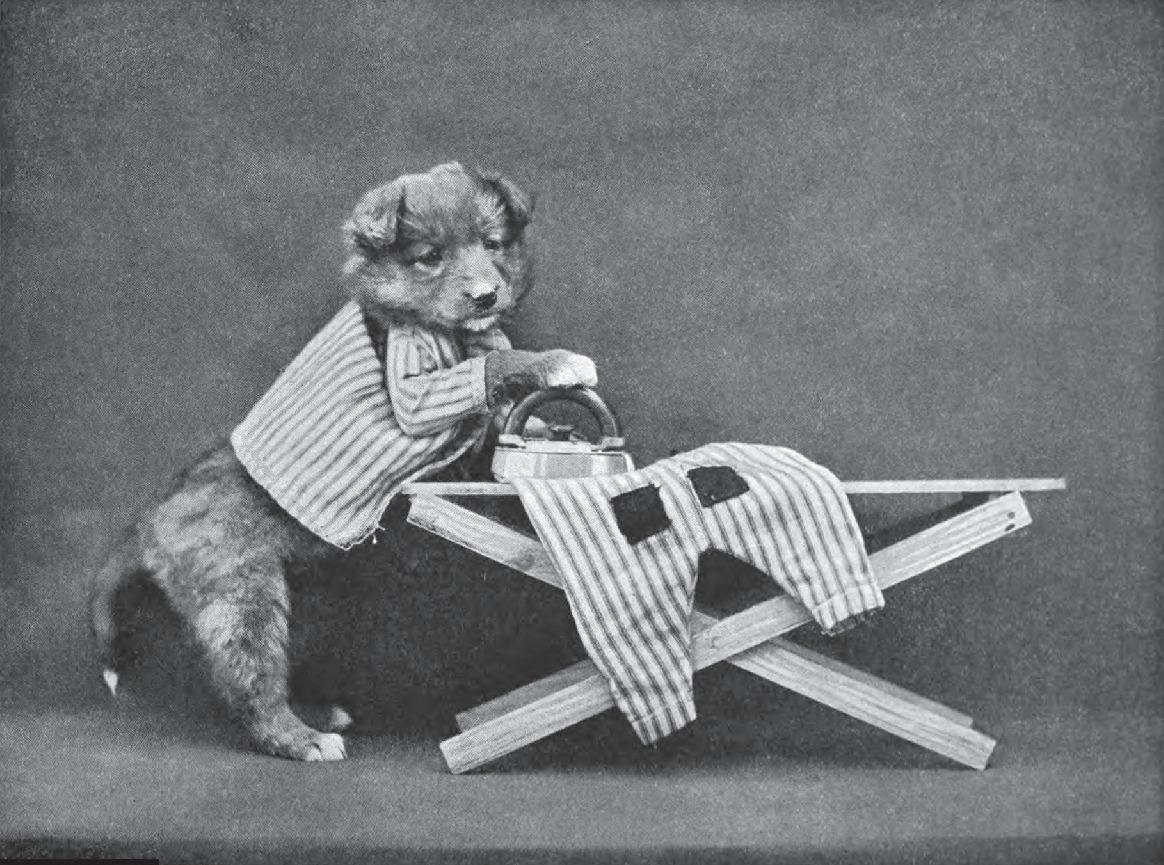 dog iron