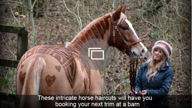 These intricate horse haircuts will have you booking your next trim at a barn