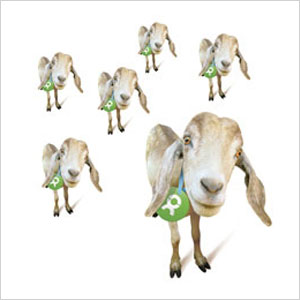 Oxfam America goat tribe