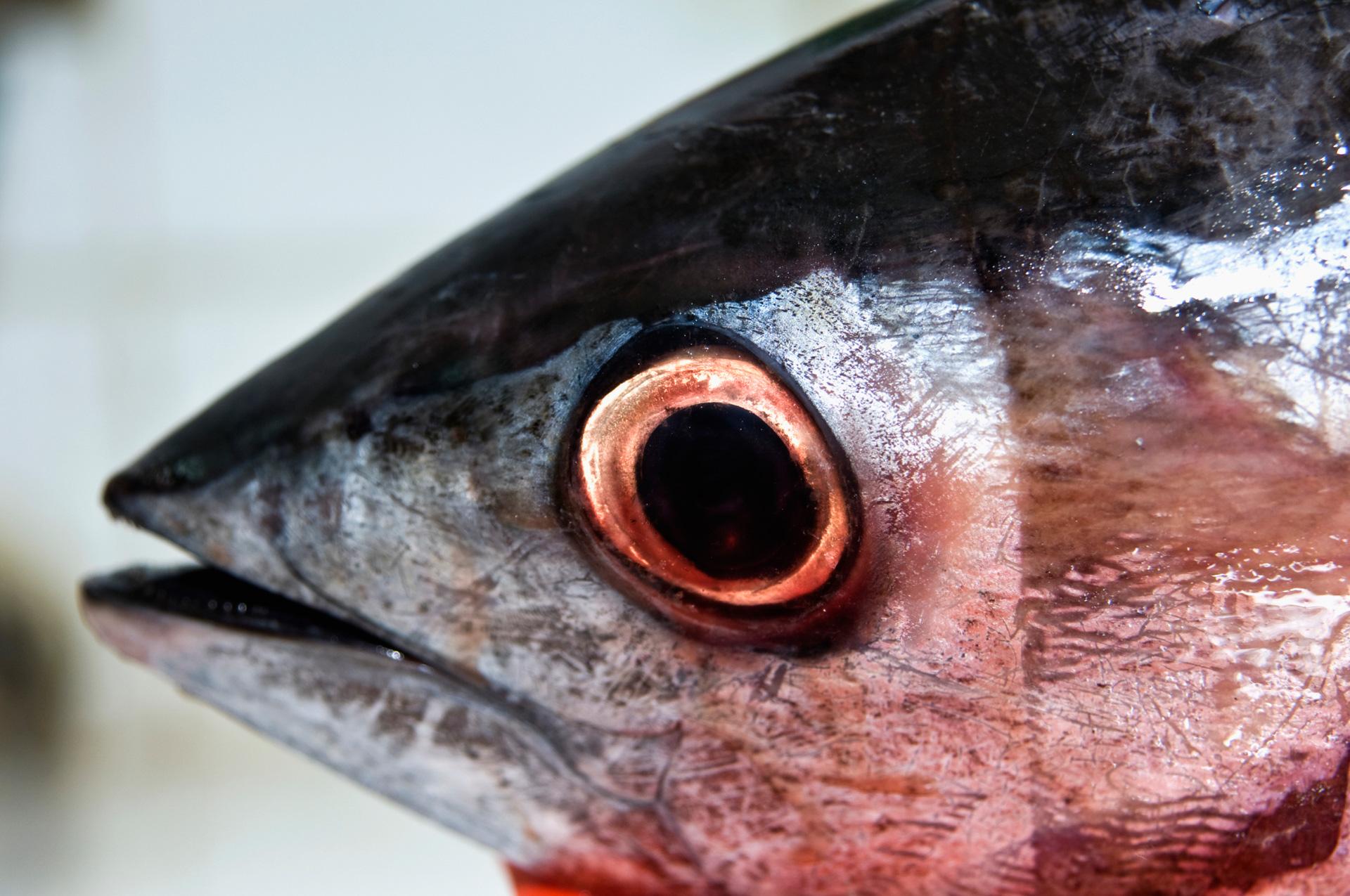 Tuna eye