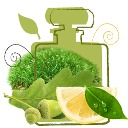 Chypre perfume scent
