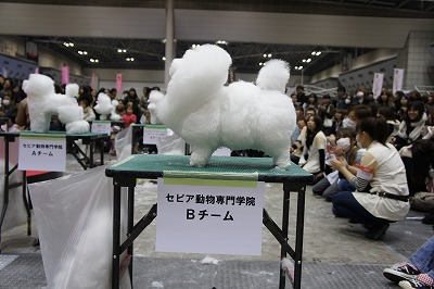 cube-grooming-expo