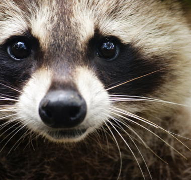World's Cutest Baby Animal