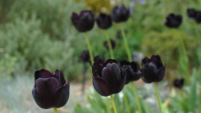 Dark, spooky plants for the Gothic
