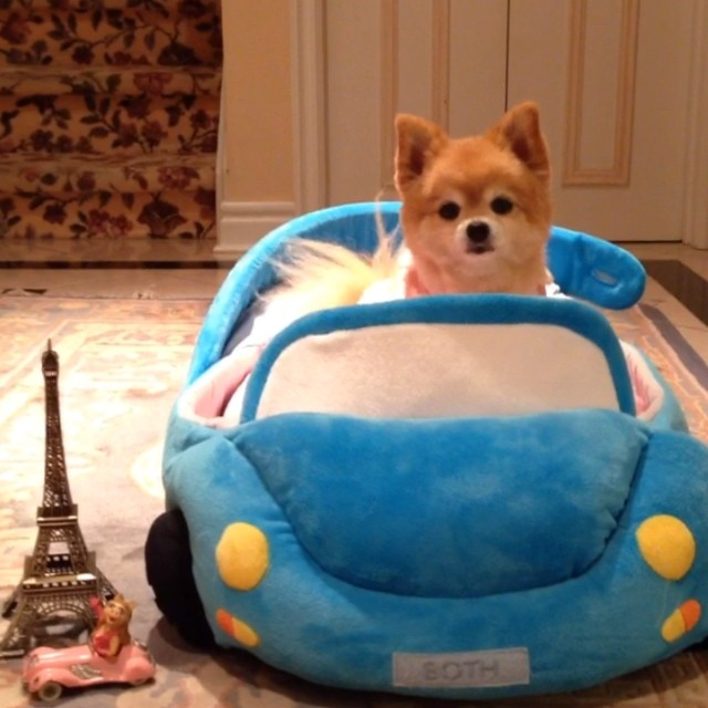 21 Insanely cute dog videos from the Beckerman blog