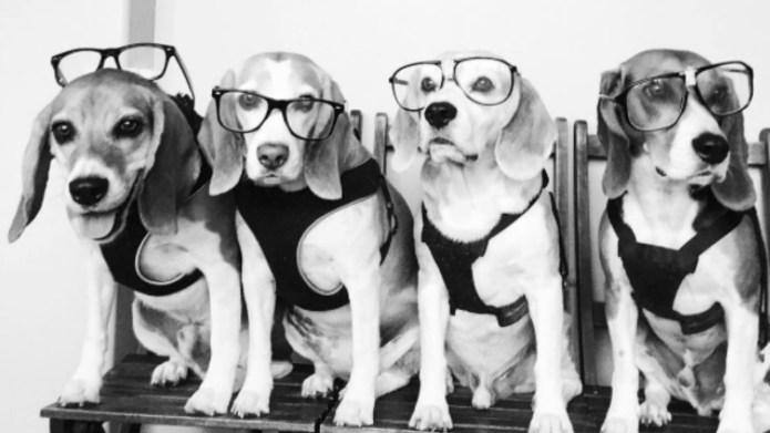 17 funkiest hipster pets of Instagram