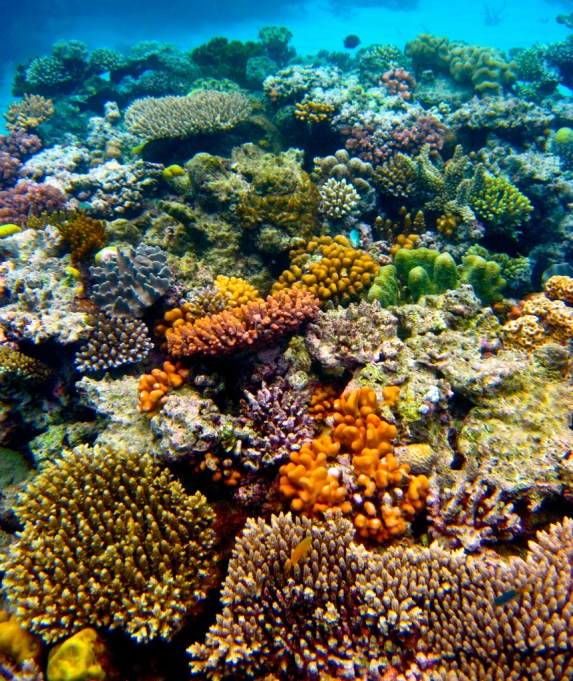 Must-See Travel Sites: Great Barrier Reef