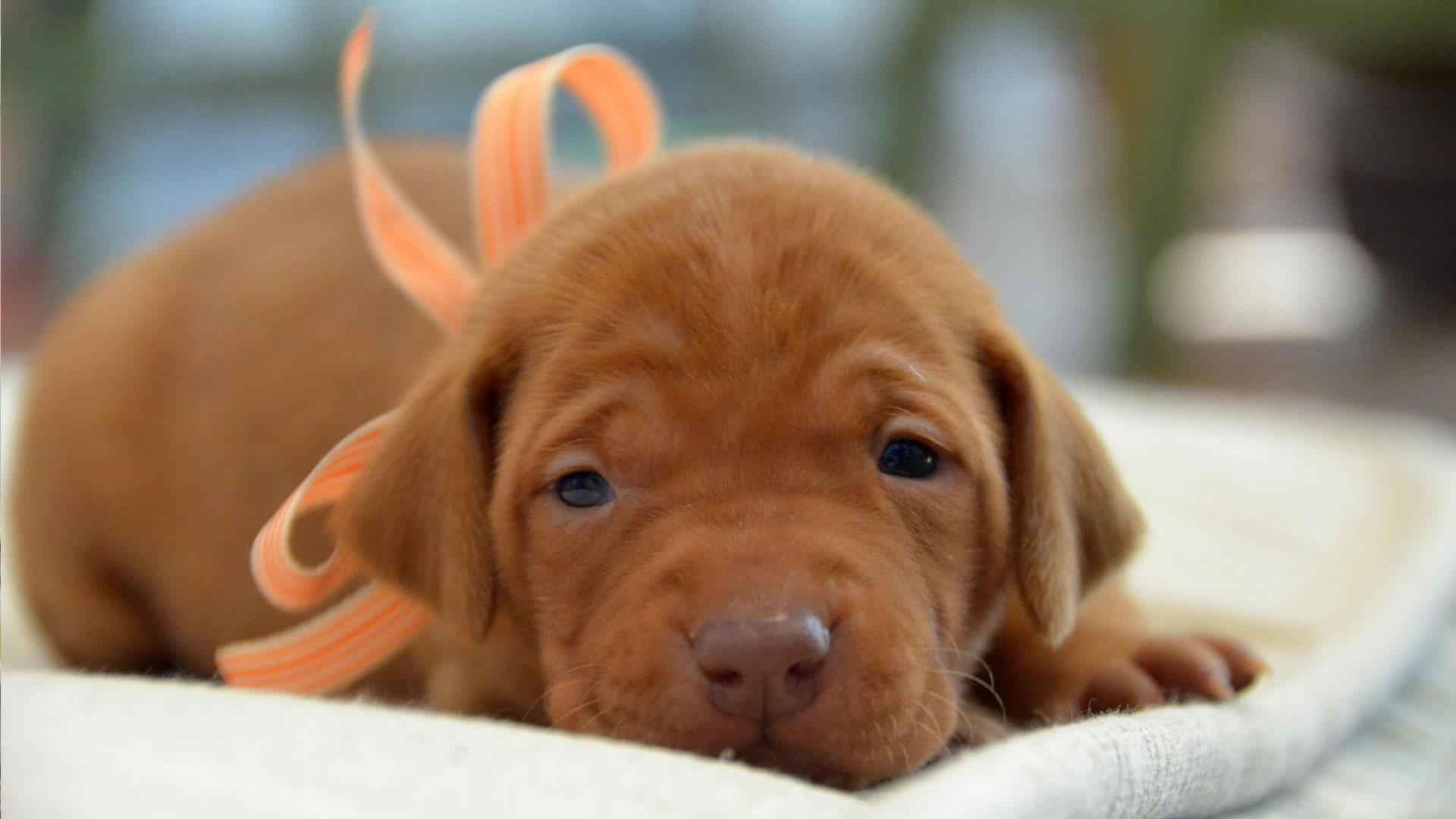 Adorable puppy | Sheknows.com