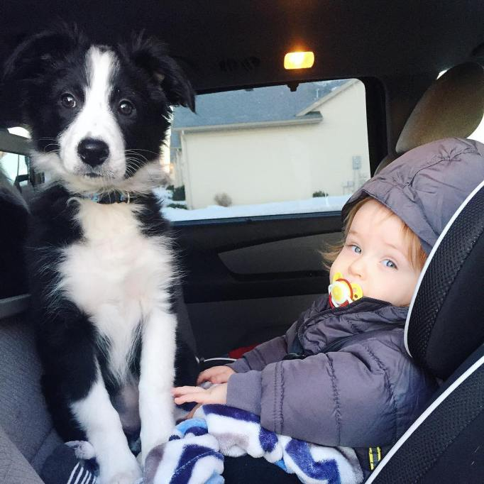 Dog with baby in car seat