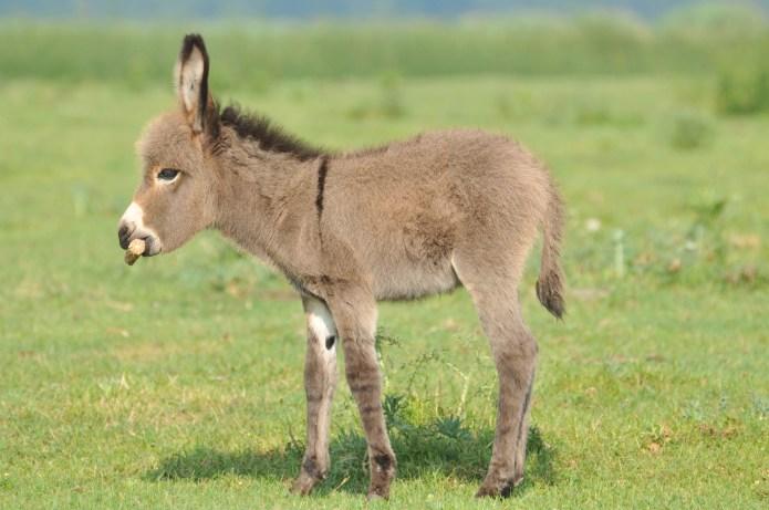 18 mini donkeys that will make
