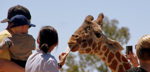 Phoenix-area zoos