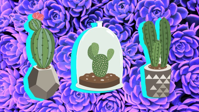 Foolproof Ways to Keep Your Succulents