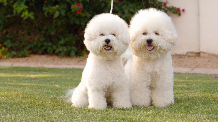 10 New non-allergenic dog breeds