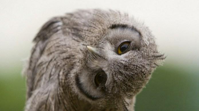 London's first pop-up 'owl bar' responds