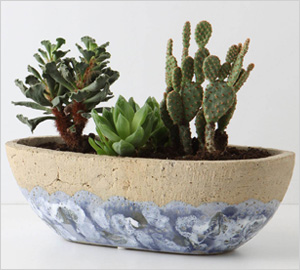 herb pot bowl from Anthropologie