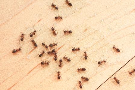 Ants on floor