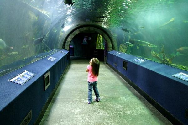 Aquarium | Sheknows.com