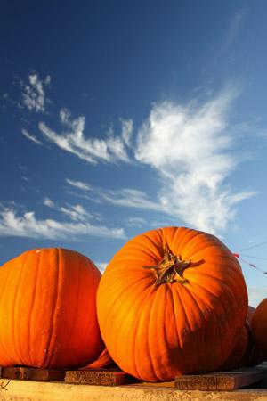 Arizona pumpkin patches