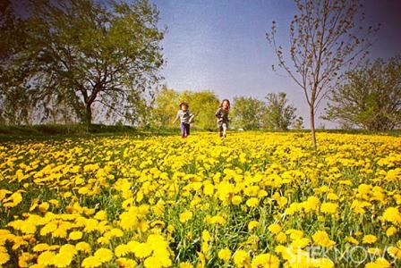 Country kids in dandelion field