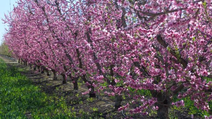 Popular Fruit Trees