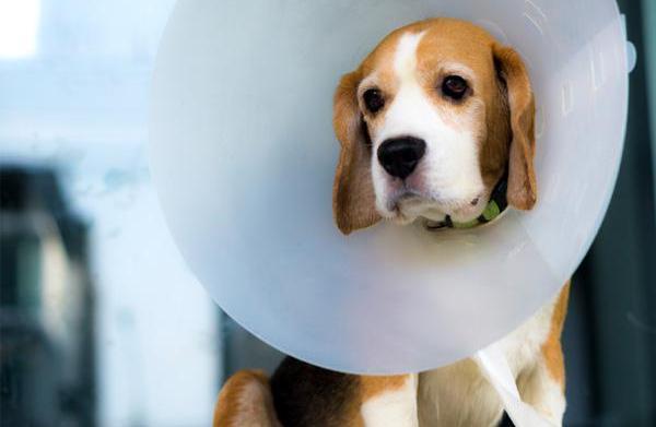 Is pet insurance necessary?